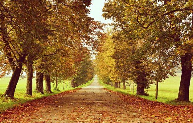efterår-i-danmark
