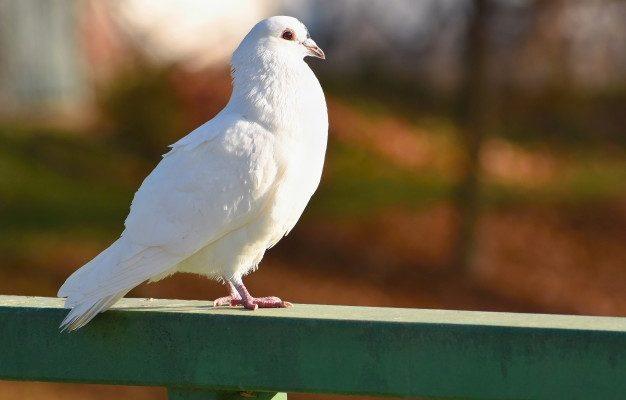 fugl-på-altanen
