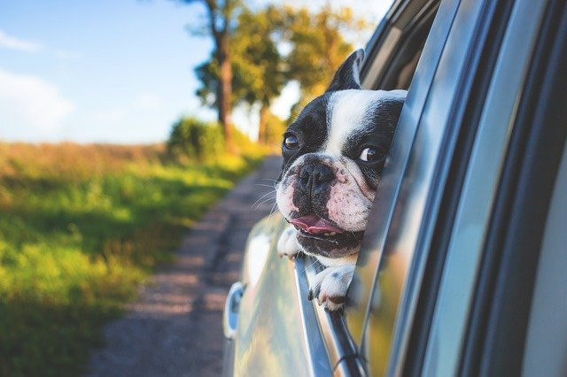 Sørg for god transport af levende dyr i landbruget