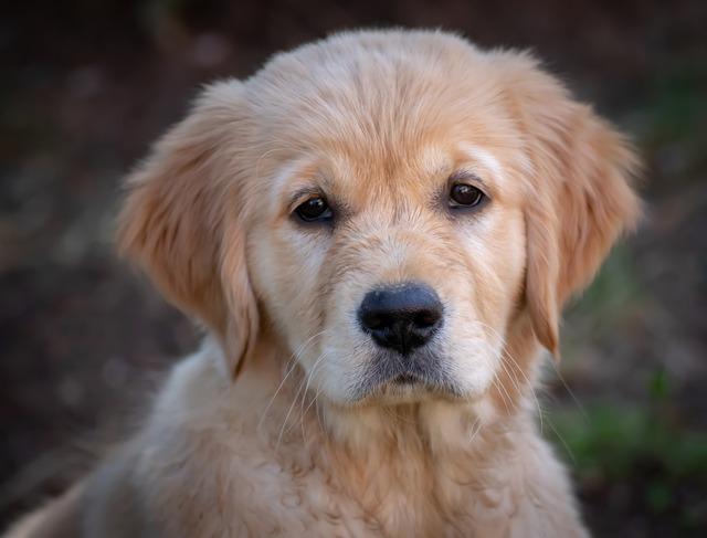Derfor bør du bruge hundesele fremfor halsbånd og snor